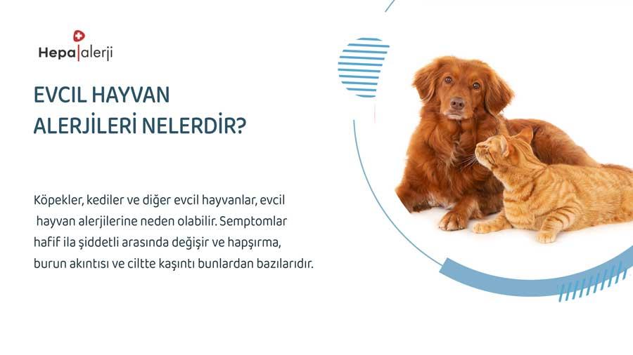 Evcil Hayvan Alerjileri Nelerdir?