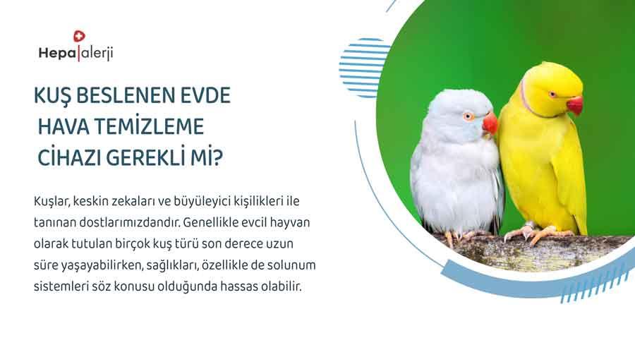 Kuş Beslenen Evde Hava Temizleme Cihazı Gerekli mi?